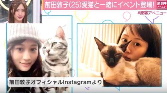 前田敦子とペット