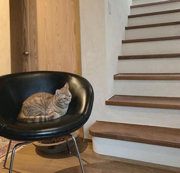 石田ゆり子の椅子2