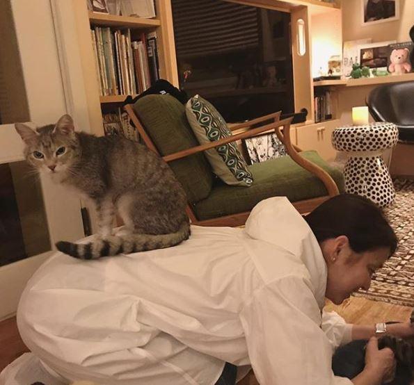 石田ゆり子の椅子