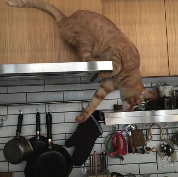 石田ゆり子のキッチン