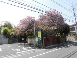 立川志らくの自宅桜