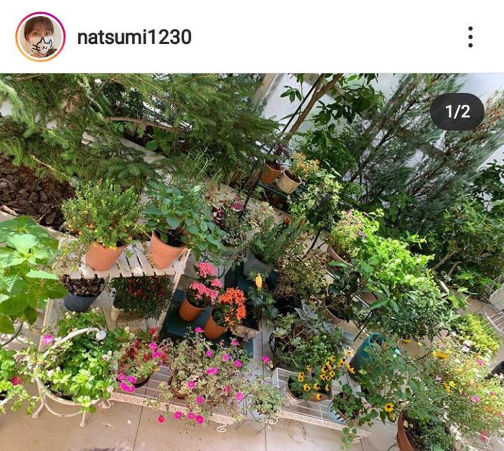 小川菜摘 庭